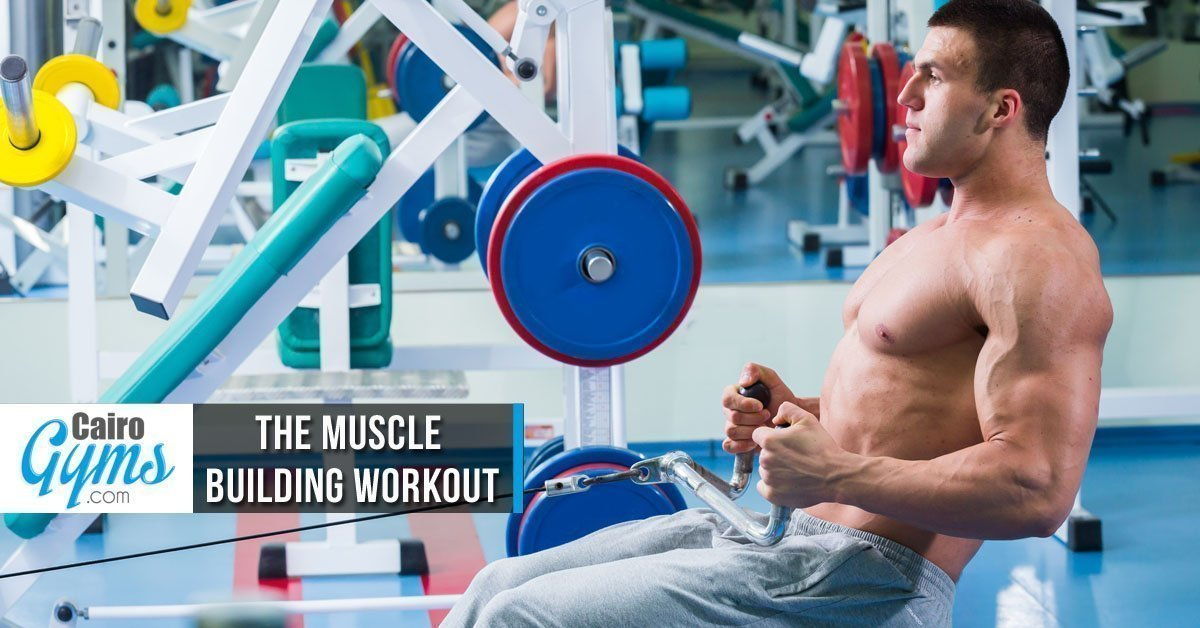 The Muscle Building Workout