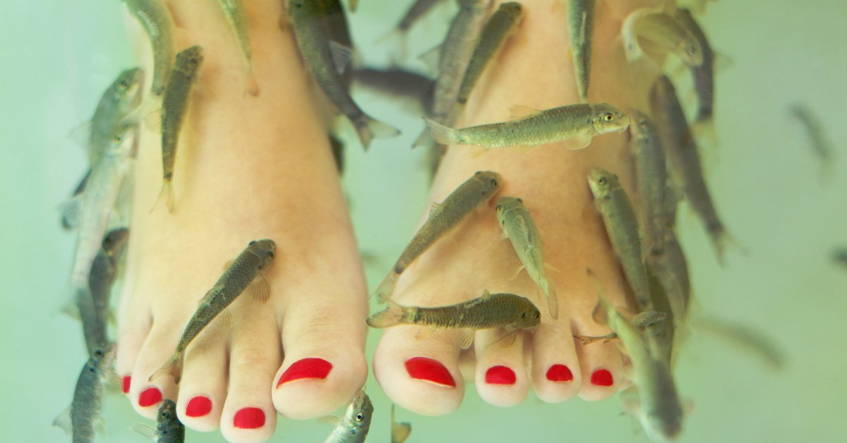 Fish spa cairo gyms for Fish spa treatment