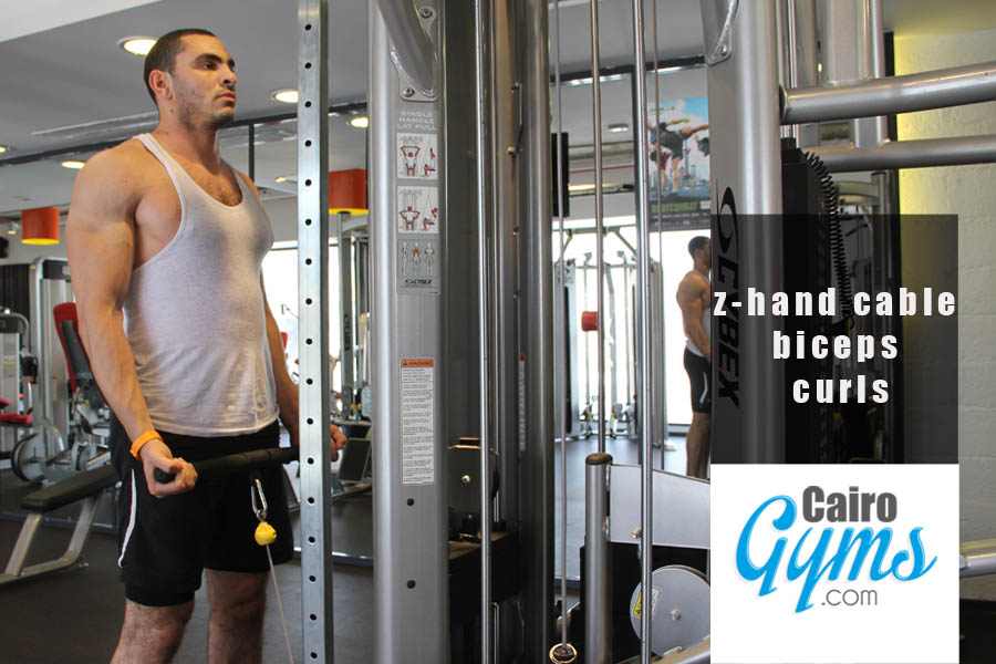 3 Day Whole Body Toning Workout   Cairo Gyms