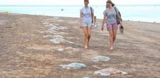 Jelly Fish Main