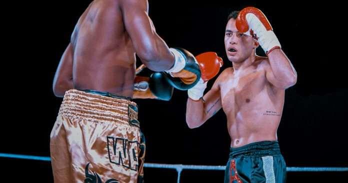 King Cheeta Box Champ Main